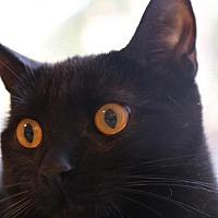 Adopt A Pet :: Tess - Chino, CA