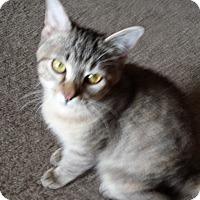 Adopt A Pet :: Luna - Bentonville, AR
