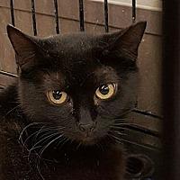 Adopt A Pet :: Kobe - Lyons, IL