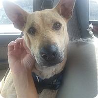 Adopt A Pet :: Noodle - Phoenix, AZ