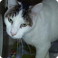 Adopt A Pet :: Wilson - Hamburg, NY