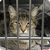 Adopt A Pet :: Bessy - Fort Smith, AR