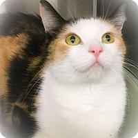 Adopt A Pet :: Rainbow Dash - Webster, MA