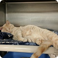 Adopt A Pet :: Charlie - Middletown, CT