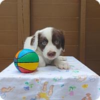 Adopt A Pet :: Wrenn-available 6/28 - Sparta, NJ