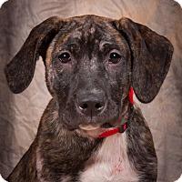 Adopt A Pet :: Jupiter - Dayton, OH