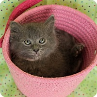 Adopt A Pet :: Catman - Muskegon, MI