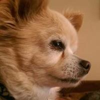 Adopt A Pet :: Leo - Heber City, UT