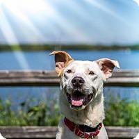 Adopt A Pet :: Basil - Round Lake Beach, IL