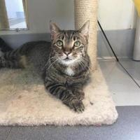 Adopt A Pet :: Wally - Cooperstown, NY