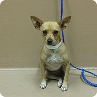 Adopt A Pet :: Meemee - Reno, NV