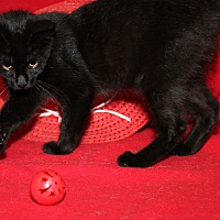 Adopt A Pet :: Sherry - Marietta, OH