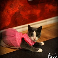 Adopt A Pet :: Revy - Mansfield, TX