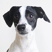 Adopt A Pet :: Mary Tyler - Wilmington, DE