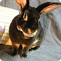 Adopt A Pet :: Valentino - Newport, DE