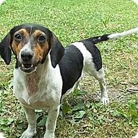 Adopt A Pet :: Beat-a-Bee - Staunton, VA