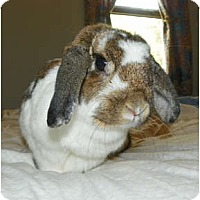 Adopt A Pet :: Penny - North Gower, ON