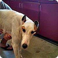 Adopt A Pet :: CRT Patrick - Knoxville, TN