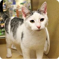 Adopt A Pet :: Tad - Colmar, PA