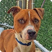 Adopt A Pet :: Bert - Port Washington, NY