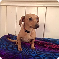 Adopt A Pet :: Willow - Marcellus, MI