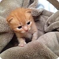 Adopt A Pet :: Oliver - Turnersville, NJ