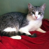 Adopt A Pet :: Squirmy - Concord, NC