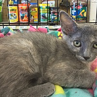 Adopt A Pet :: Grace - Gilbert, AZ