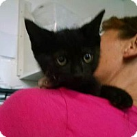 Adopt A Pet :: Hemmingway - Belleville, MI