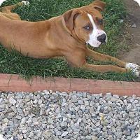 Adopt A Pet :: Nera - Ogden, UT