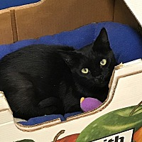 Adopt A Pet :: Lillie - Byron Center, MI