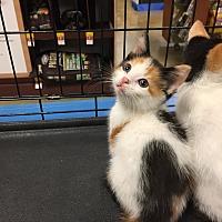 Adopt A Pet :: Thumpurr: Urgent - Piscataway, NJ