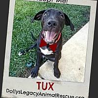 Adopt A Pet :: TUX - Lincoln, NE