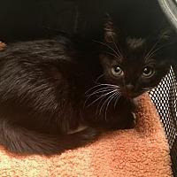 Adopt A Pet :: Fish - Fort Lauderdale, FL