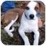 Photo 1 - Hound (Unknown Type) Mix Dog for adoption in Harrisburg, Pennsylvania - Opie