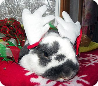 Lop-Eared Mix for adoption in North Gower, Ontario - Tommy