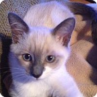 Adopt A Pet :: Luna - Vero Beach, FL