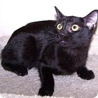Adopt A Pet :: K-Doe2-Capri - Colorado Springs, CO