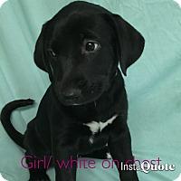 Adopt A Pet :: Jane Austen - Cumming, GA