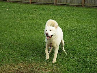 Husky Mix Dog for adoption in Watha, North Carolina - Mr. Goodbar