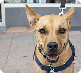 Shepherd (Unknown Type)/Basset Hound Mix Dog for adoption in Jersey City, New Jersey - Jim Hopper