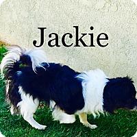 Adopt A Pet :: JACKIE - SO CALIF, CA