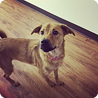 Adopt A Pet :: Sasha - Seattle, WA