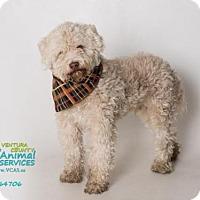 Adopt A Pet :: *ELIJAH - Camarillo, CA