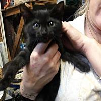 Adopt A Pet :: Jewel - West Palm Beach, FL