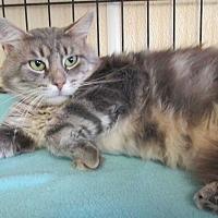 Adopt A Pet :: Iggy - Reeds Spring, MO
