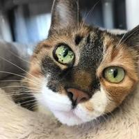 Adopt A Pet :: Thunder - Marshfield, WI