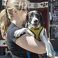Adopt A Pet :: Venus Williams - Jersey City, NJ
