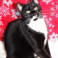 Adopt A Pet :: Mix 93.3 - Mission, KS