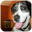 Photo 1 - Catahoula Leopard Dog Mix Dog for adoption in Bunnell, Florida - Lucky